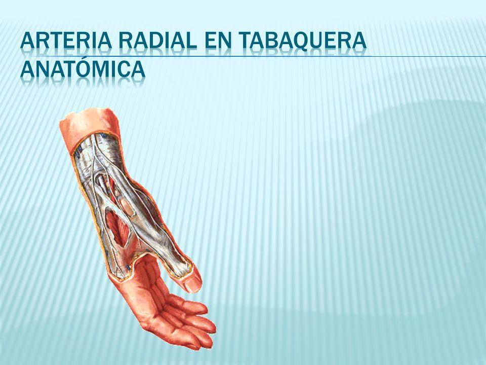 Arteria radial en tabaquera anatómica