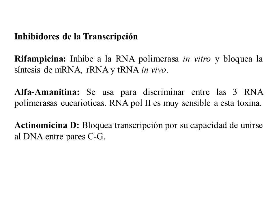 Inhibidores de la Transcripción