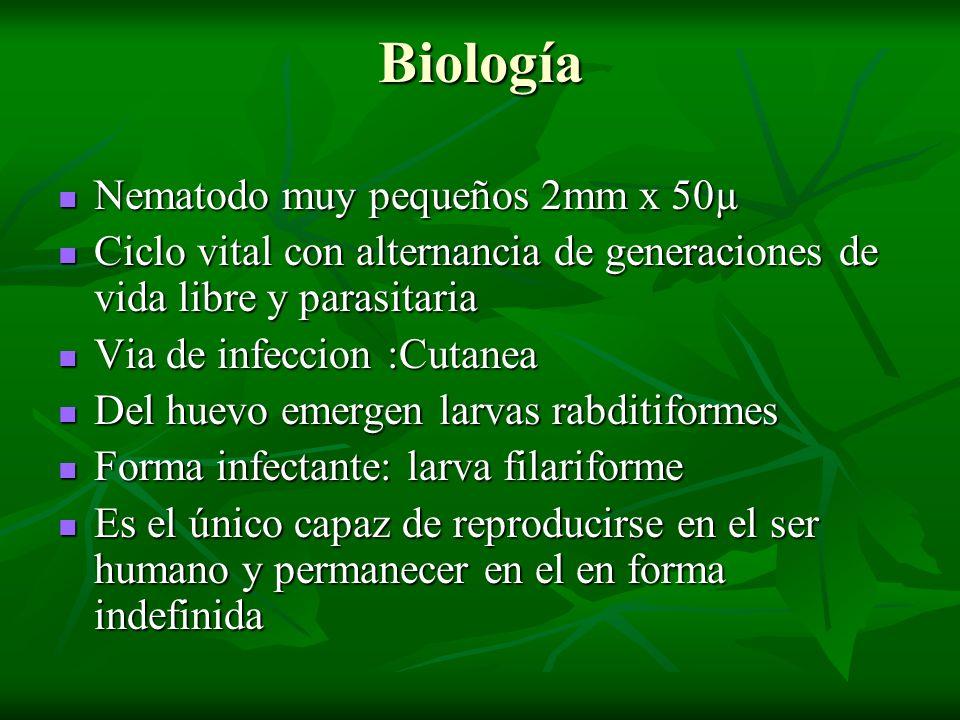 Biología Nematodo muy pequeños 2mm x 50µ
