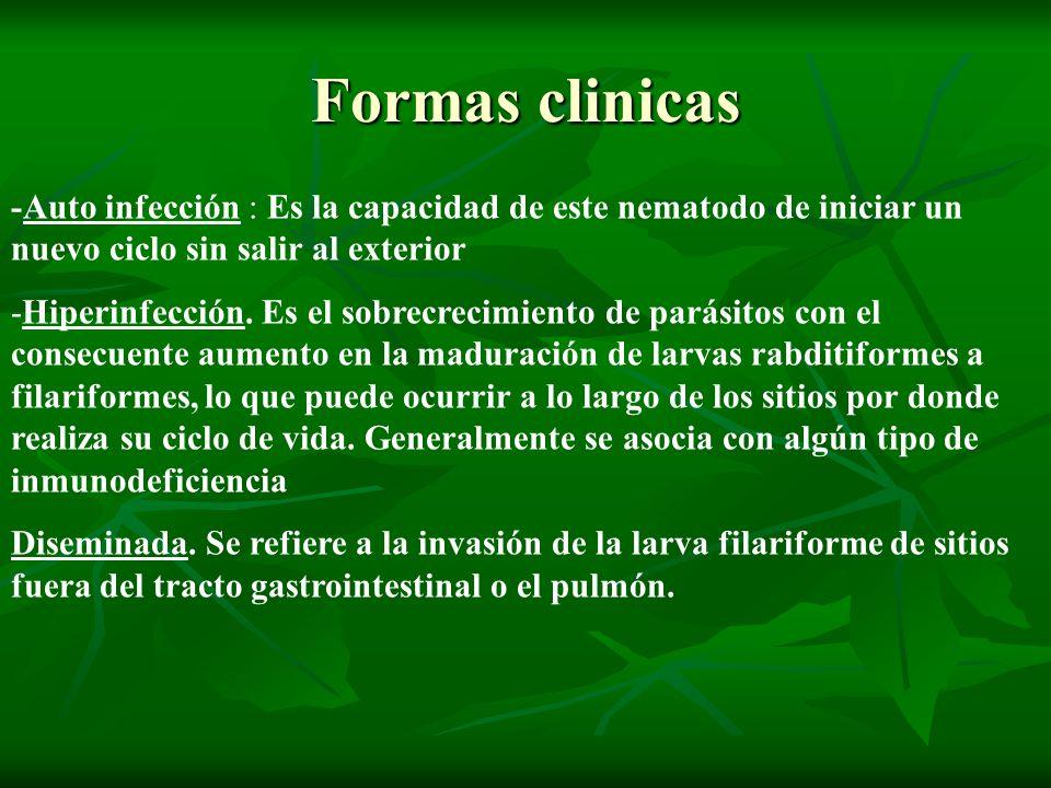 Formas clinicas -Auto infección : Es la capacidad de este nematodo de iniciar un nuevo ciclo sin salir al exterior.