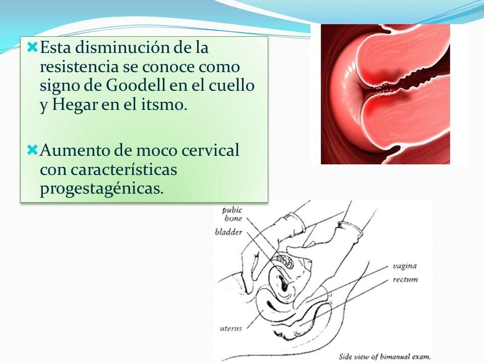 Esta disminución de la resistencia se conoce como signo de Goodell en el cuello y Hegar en el itsmo.