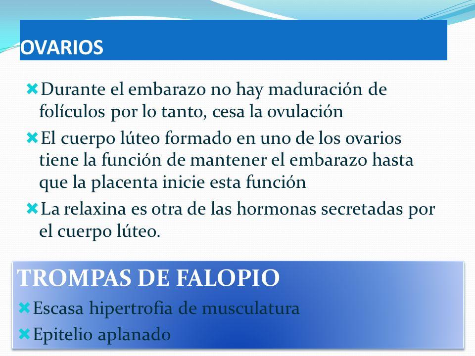 TROMPAS DE FALOPIO OVARIOS