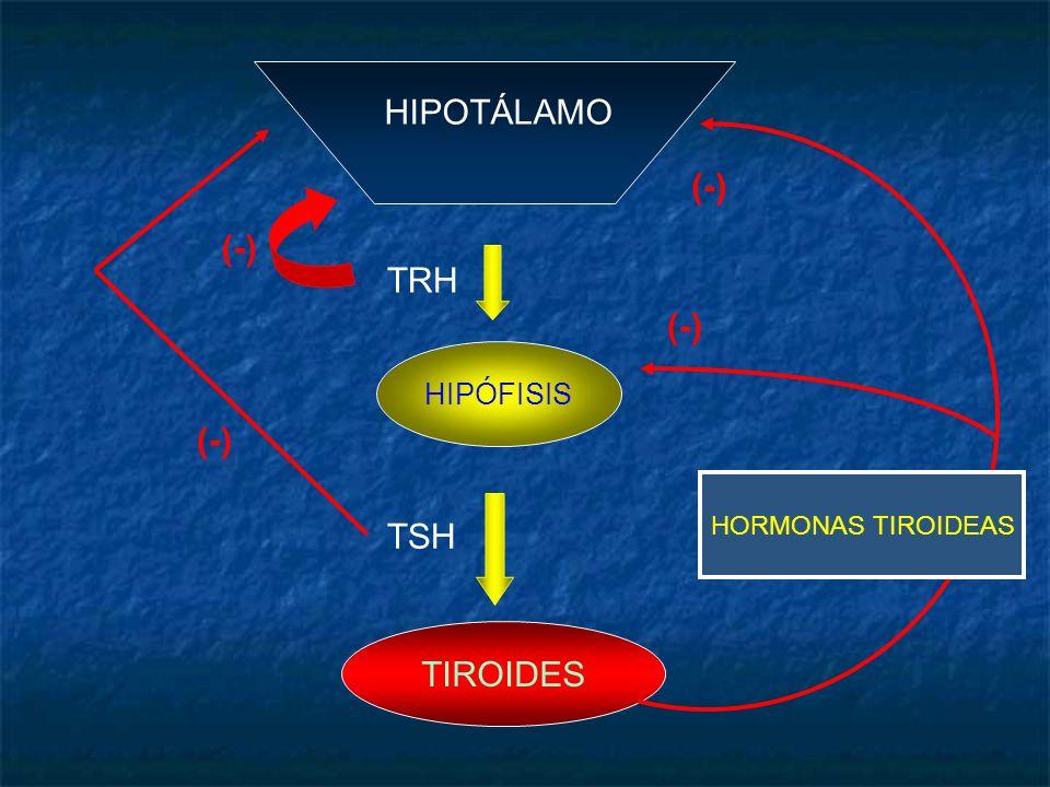 HIPOTÁLAMO HORMONAS TIROIDEAS (-) (-) TRH HIPÓFISIS (-) TSH TIROIDES