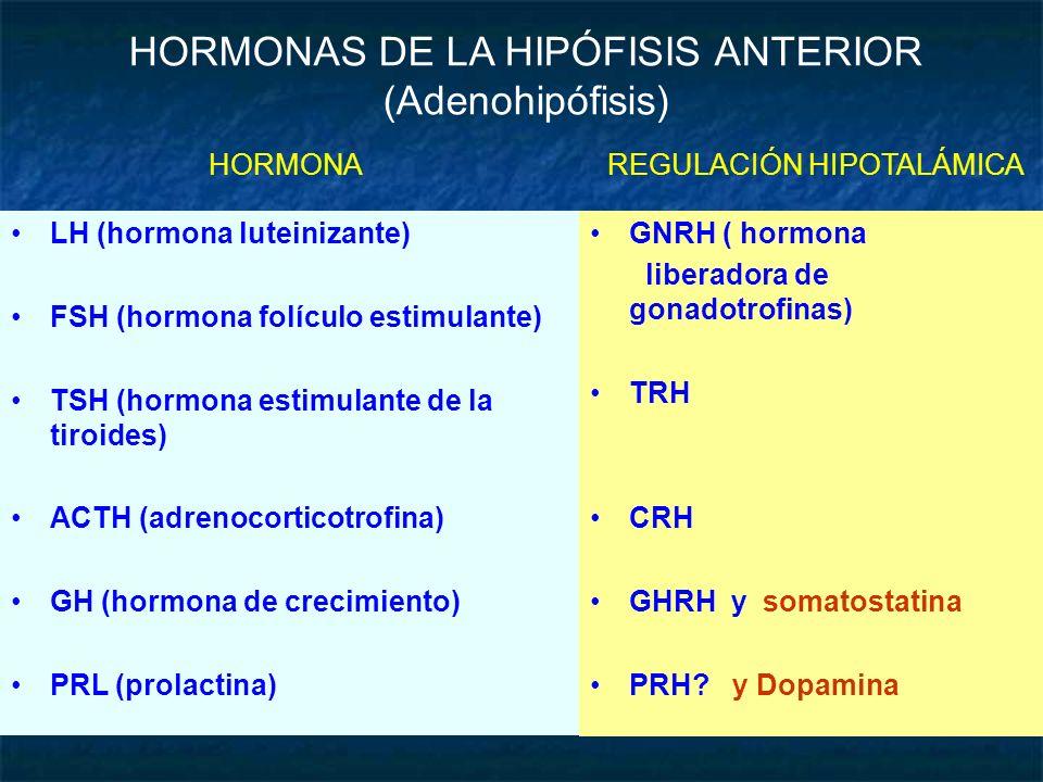 HORMONAS DE LA HIPÓFISIS ANTERIOR (Adenohipófisis)