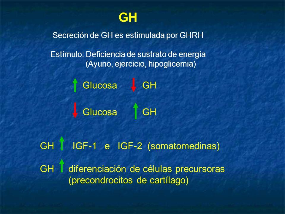 GH Glucosa GH GH IGF-1 e IGF-2 (somatomedinas)