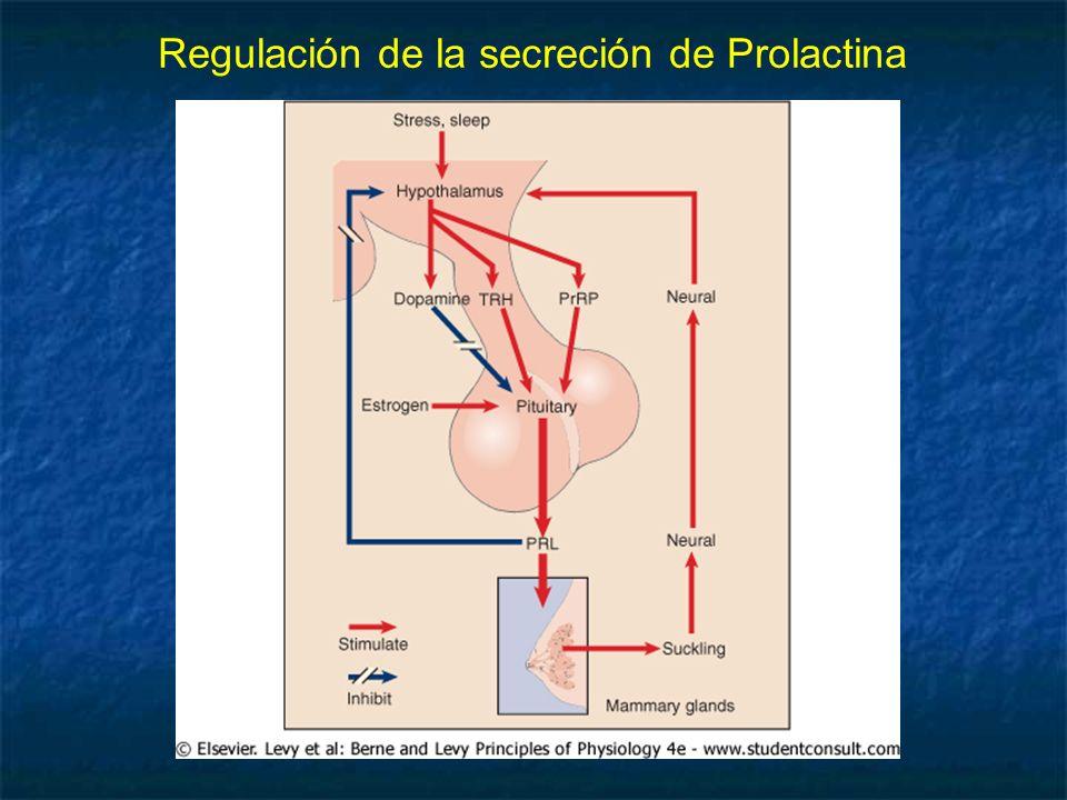 Regulación de la secreción de Prolactina