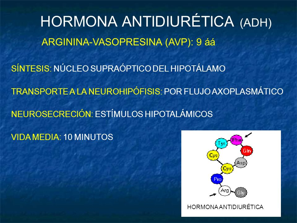 HORMONA ANTIDIURÉTICA (ADH)