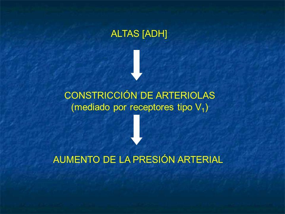CONSTRICCIÓN DE ARTERIOLAS (mediado por receptores tipo V1)