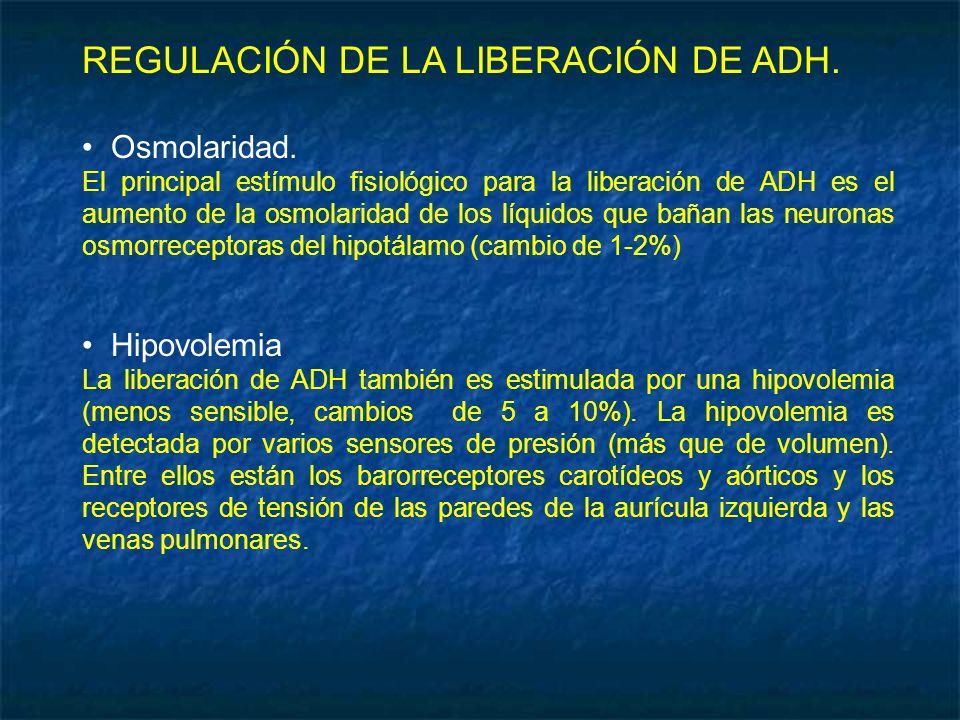 REGULACIÓN DE LA LIBERACIÓN DE ADH.