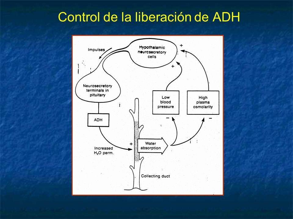 Control de la liberación de ADH