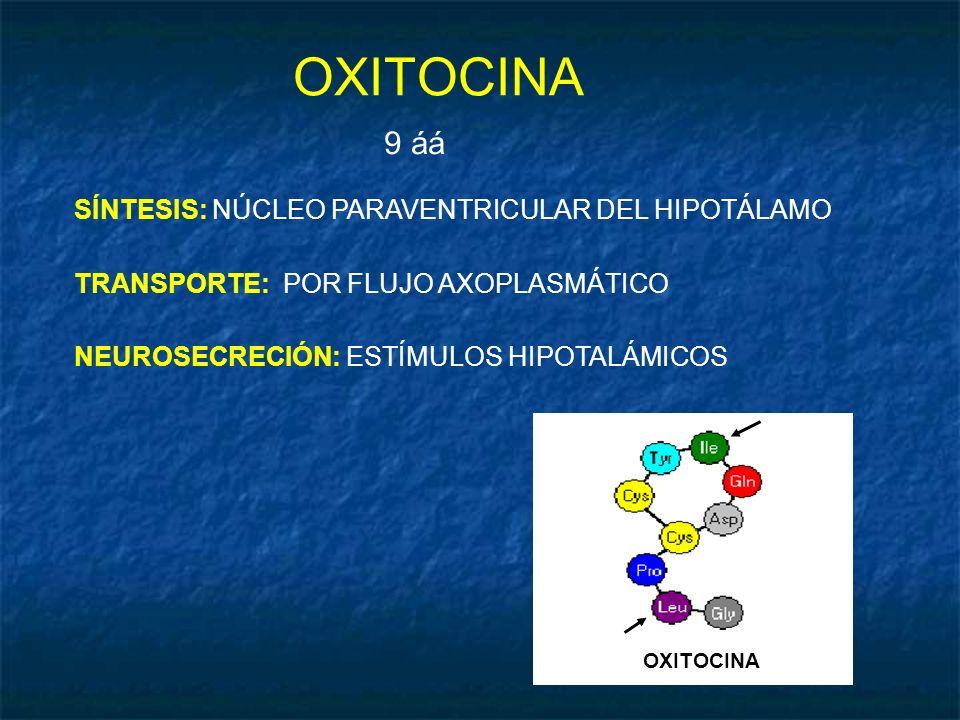 OXITOCINA 9 áá SÍNTESIS: NÚCLEO PARAVENTRICULAR DEL HIPOTÁLAMO