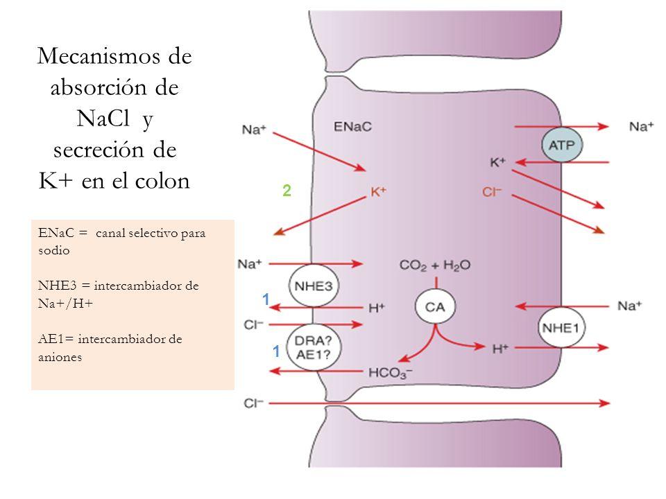 Mecanismos de absorción de NaCl y secreción de K+ en el colon
