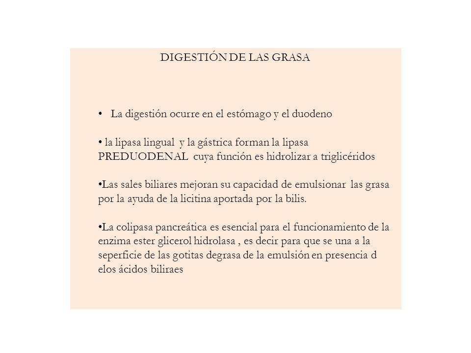 DIGESTIÓN DE LAS GRASA La digestión ocurre en el estómago y el duodeno.