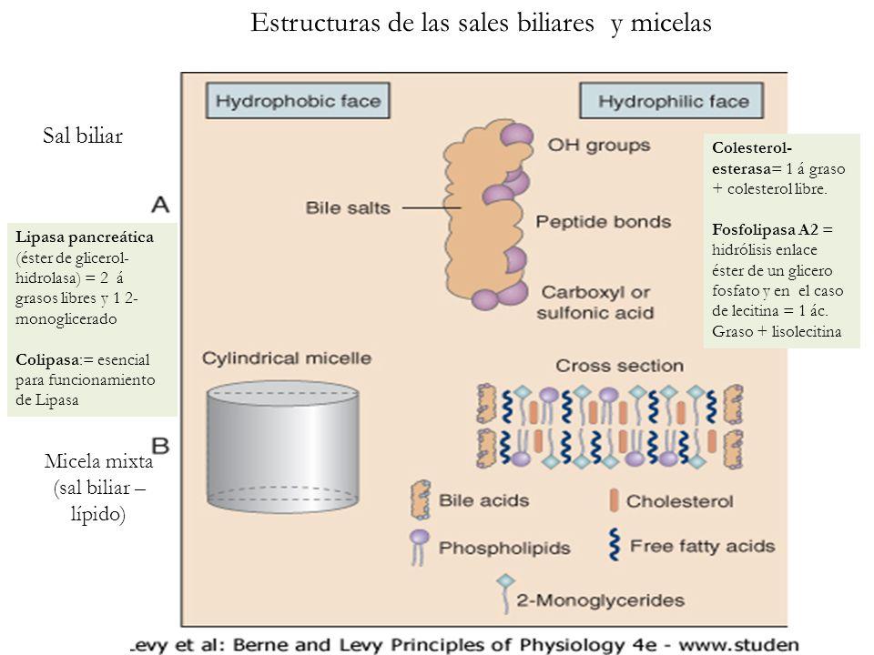 Estructuras de las sales biliares y micelas