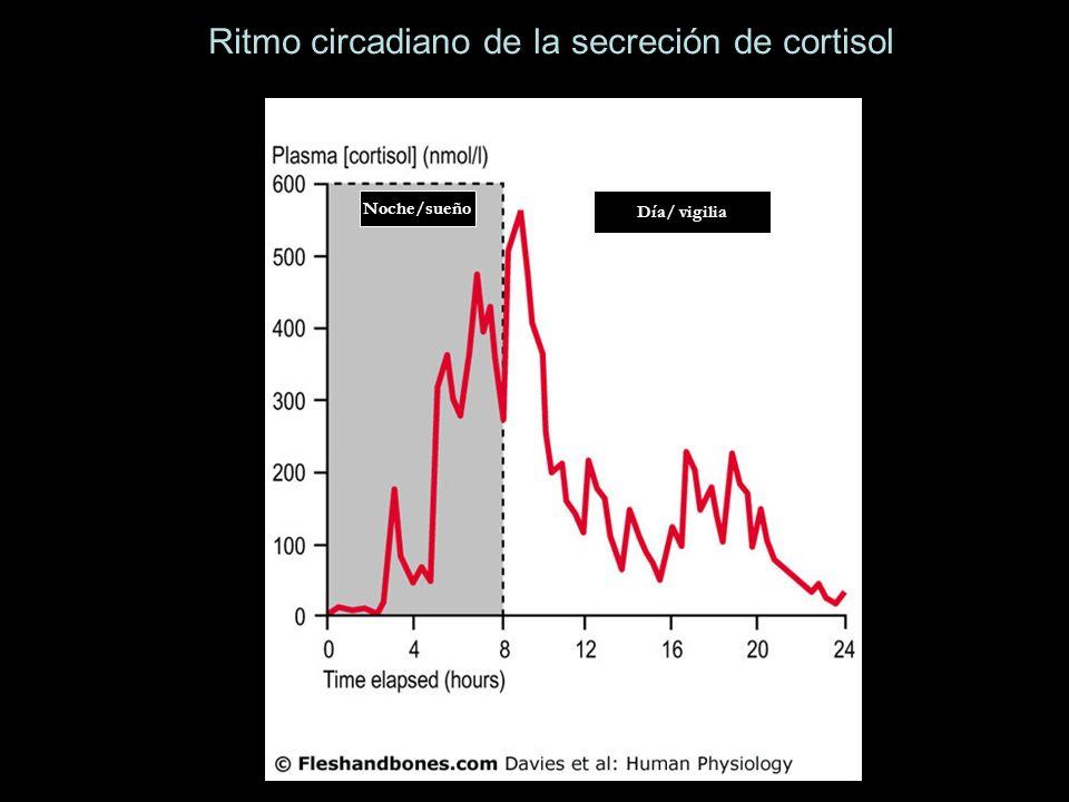 Ritmo circadiano de la secreción de cortisol