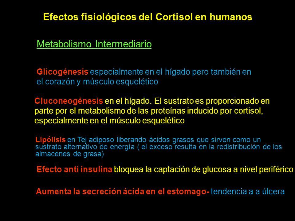 Efectos fisiológicos del Cortisol en humanos