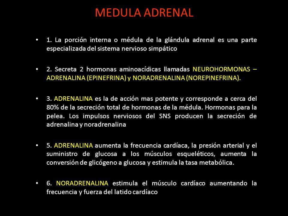MEDULA ADRENAL 1. La porción interna o médula de la glándula adrenal es una parte especializada del sistema nervioso simpático.
