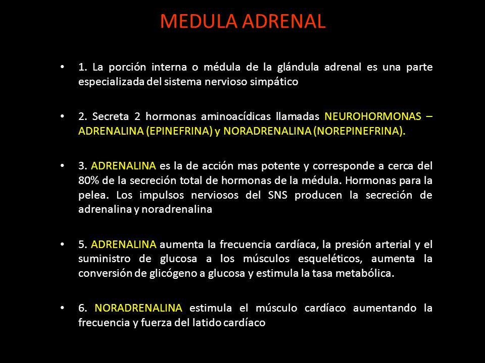 MEDULA ADRENAL1. La porción interna o médula de la glándula adrenal es una parte especializada del sistema nervioso simpático.