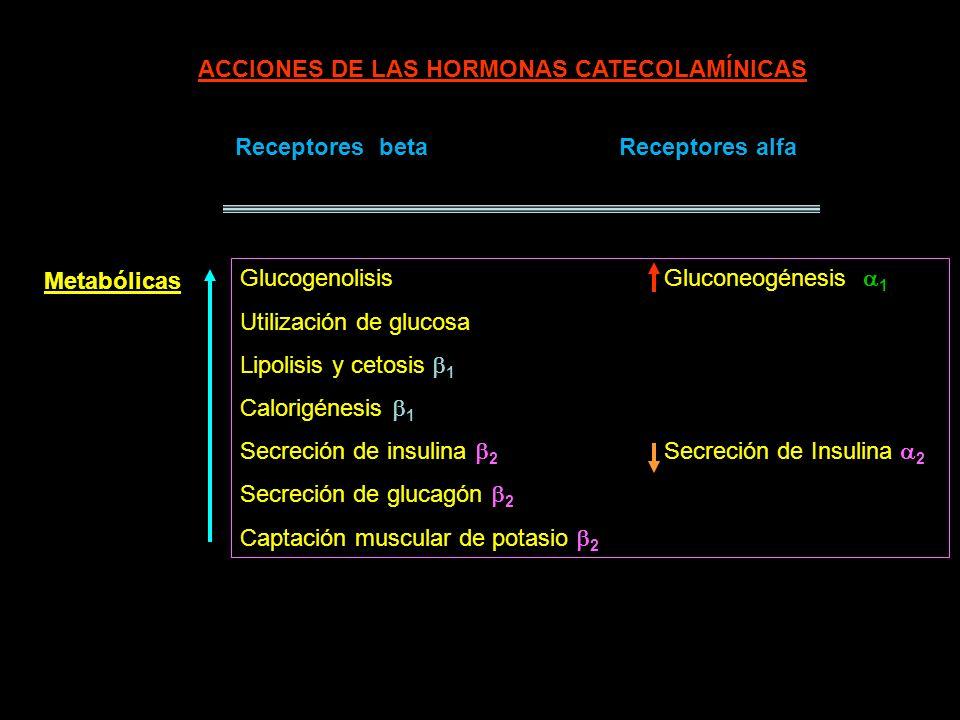 ACCIONES DE LAS HORMONAS CATECOLAMÍNICAS