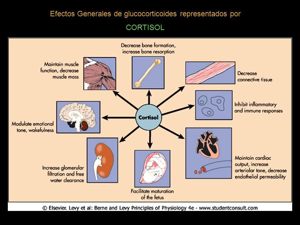 Efectos Generales de glucocorticoides representados por CORTISOL