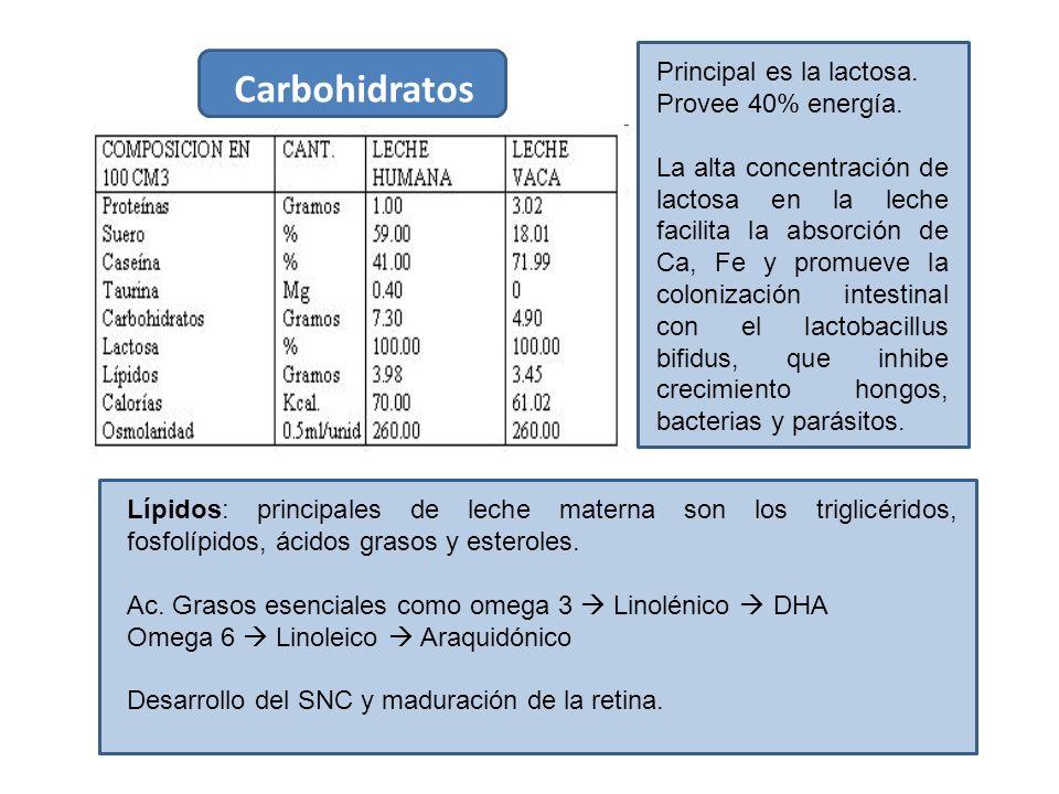 Carbohidratos Principal es la lactosa. Provee 40% energía.