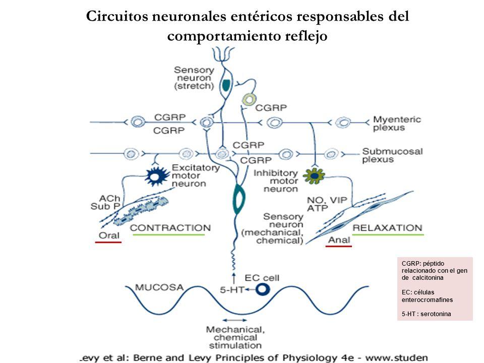 Circuitos neuronales entéricos responsables del comportamiento reflejo