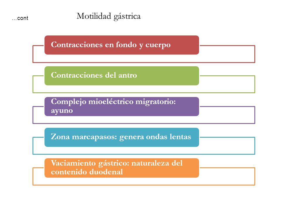 Motilidad gástrica …cont Contracciones en fondo y cuerpo