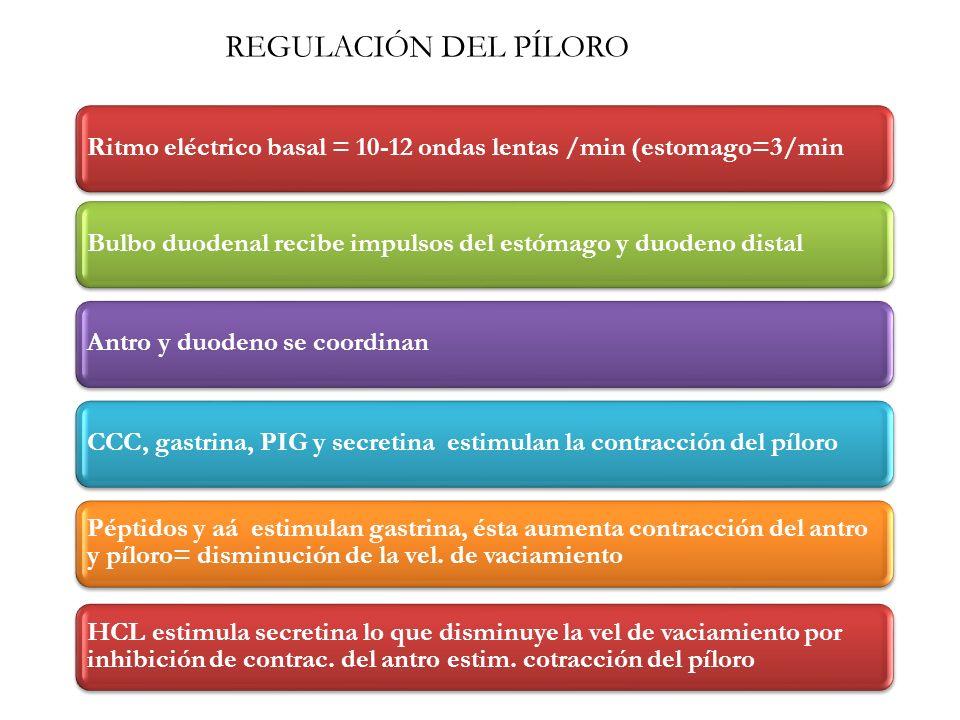 REGULACIÓN DEL PÍLORO Ritmo eléctrico basal = 10-12 ondas lentas /min (estomago=3/min. Bulbo duodenal recibe impulsos del estómago y duodeno distal.
