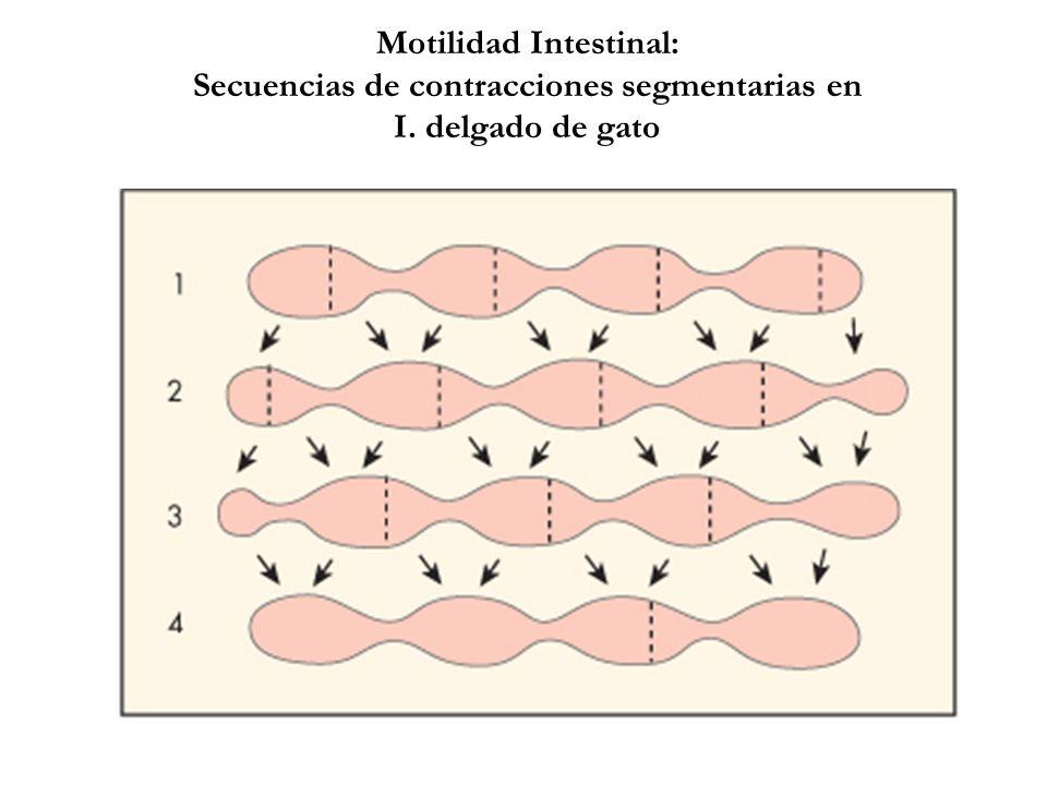 Motilidad Intestinal: