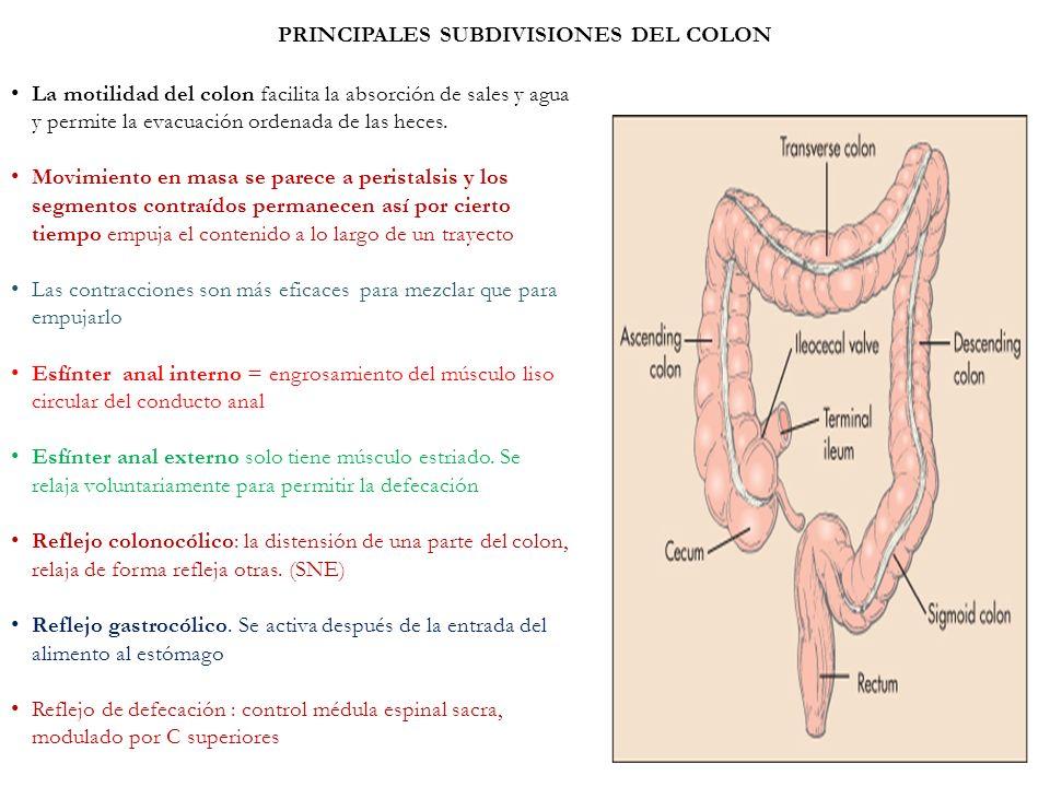 PRINCIPALES SUBDIVISIONES DEL COLON