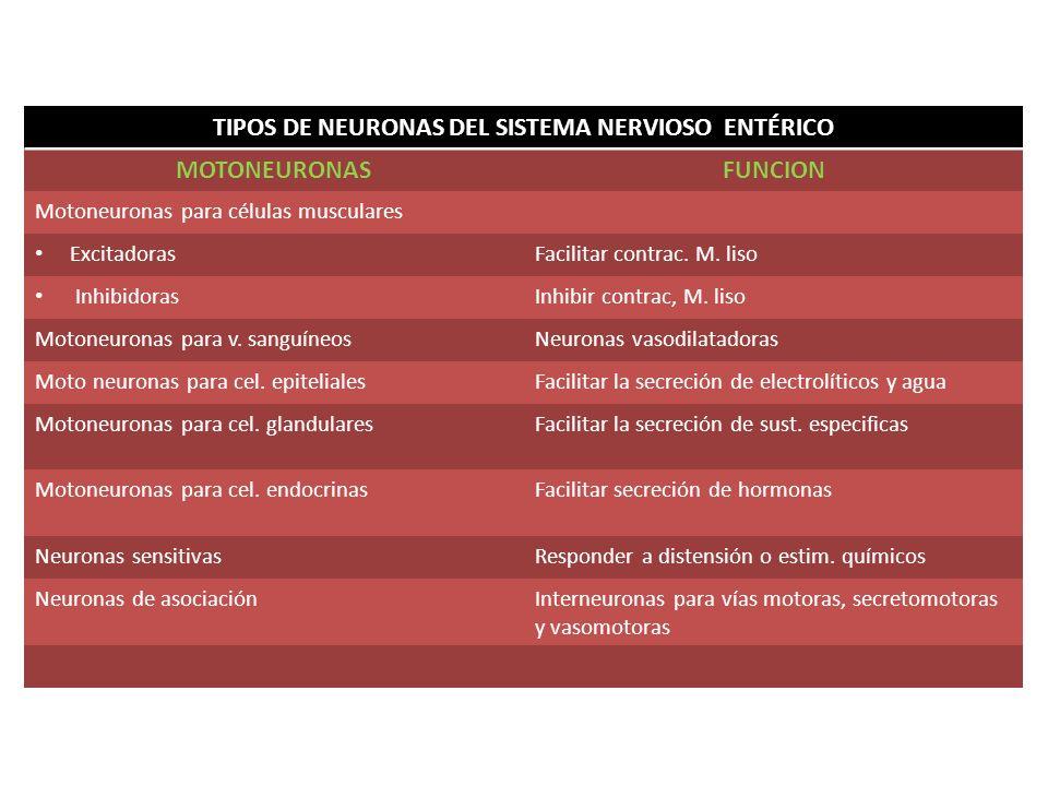 TIPOS DE NEURONAS DEL SISTEMA NERVIOSO ENTÉRICO