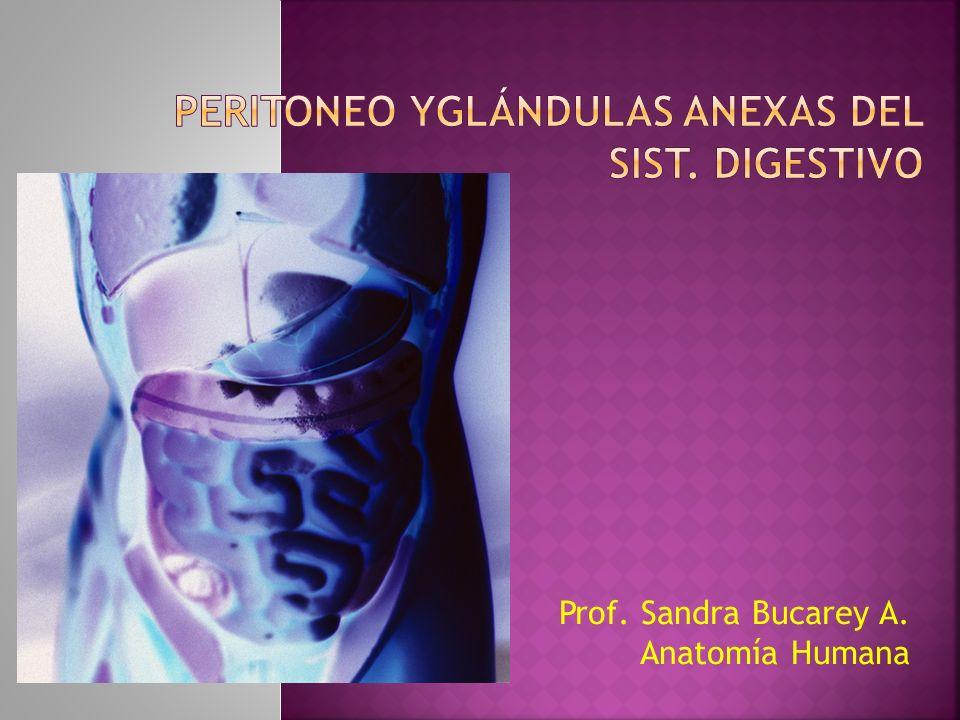PERITONEO YGLÁNDULAS ANEXAS DEL SIST. DIGESTIVO