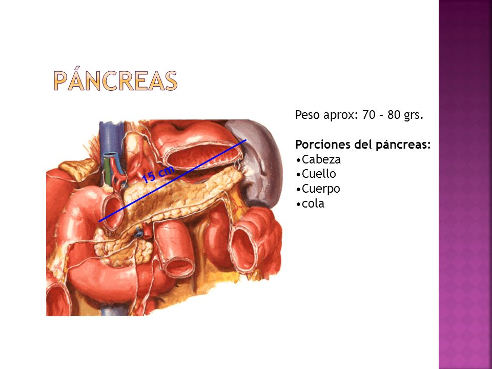 Páncreas Peso aprox: 70 – 80 grs. Porciones del páncreas: Cabeza