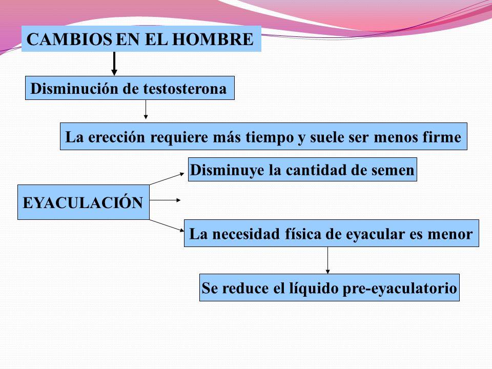 CAMBIOS EN EL HOMBRE Disminución de testosterona