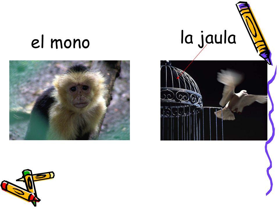la jaula el mono