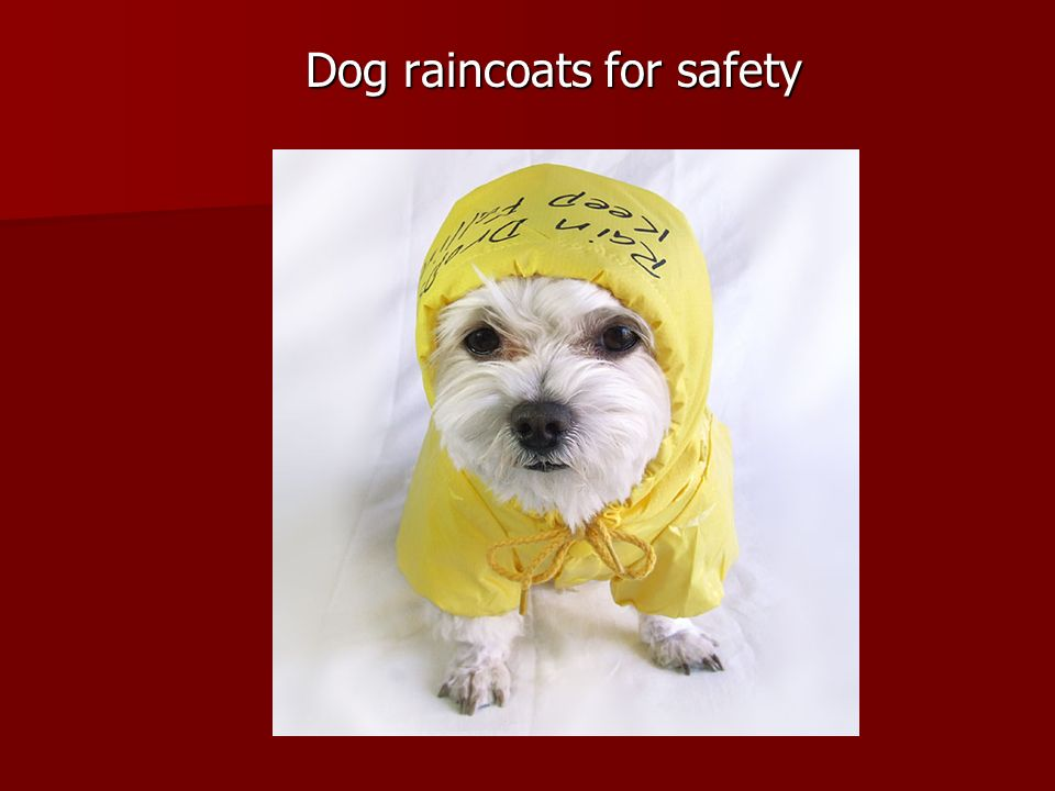 Dog raincoats for safety
