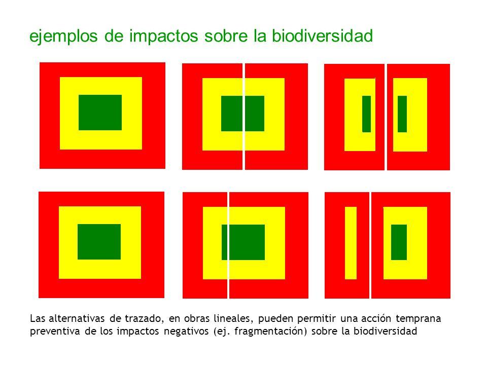 ejemplos de impactos sobre la biodiversidad