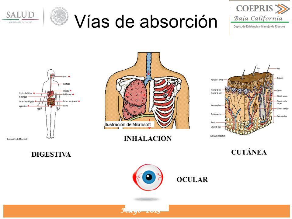 Vías de absorción INHALACIÓN CUTÁNEA DIGESTIVA OCULAR