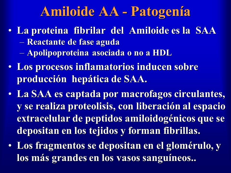 Amiloide AA - Patogenía
