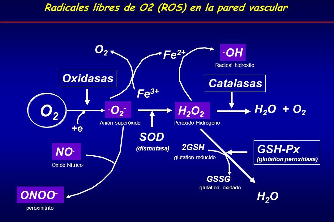 Radicales libres de O2 (ROS) en la pared vascular