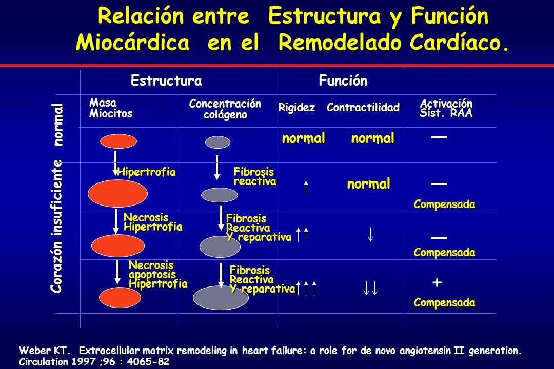 Relación entre Estructura y Función Miocárdica en el Remodelado Cardíaco.