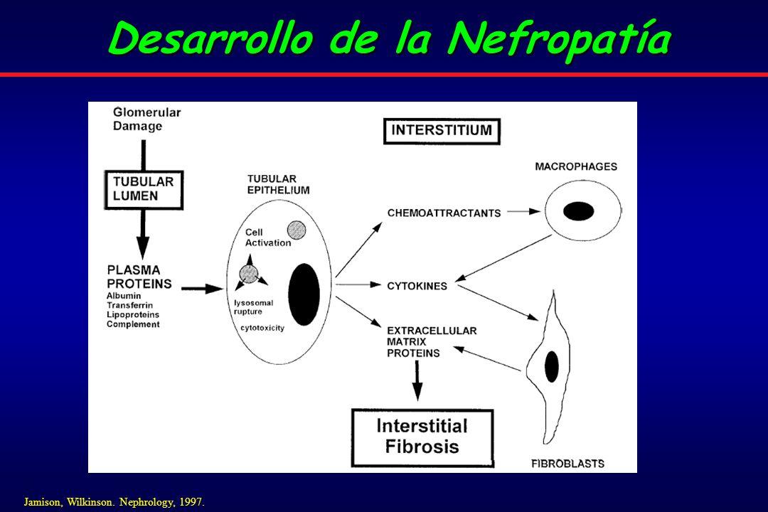 Desarrollo de la Nefropatía