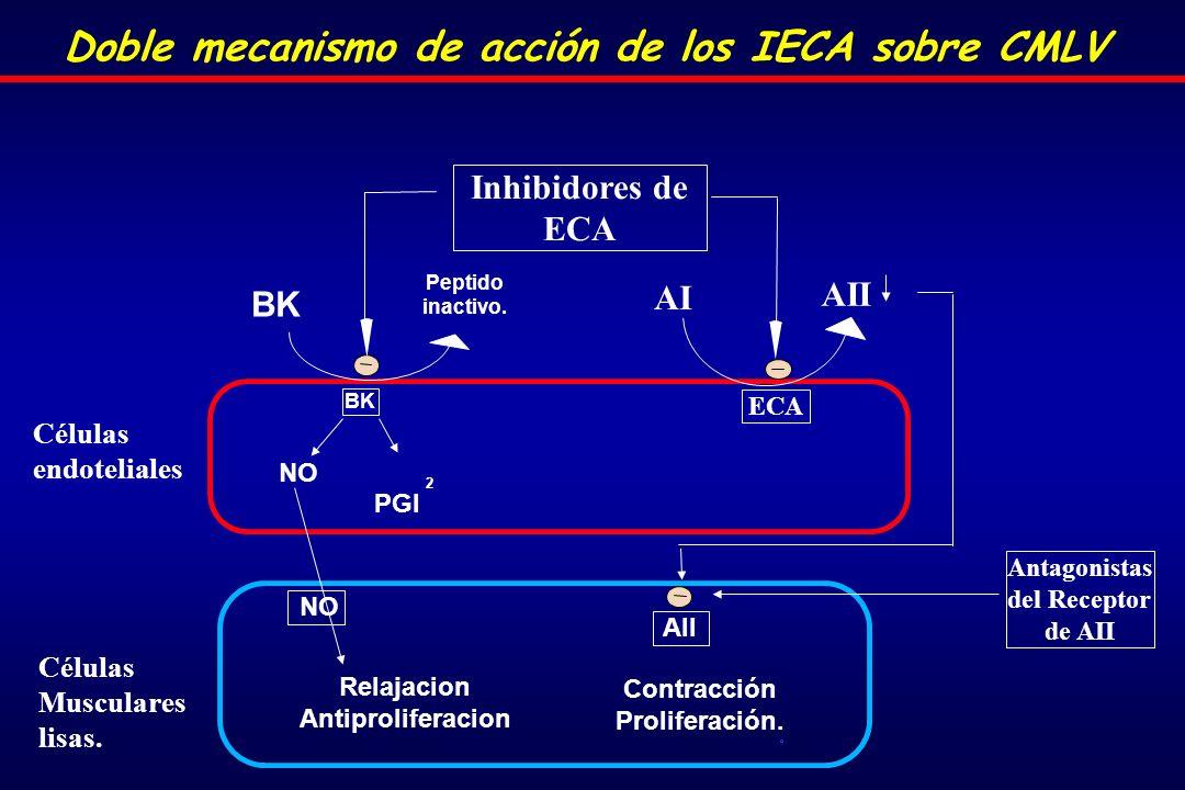 Doble mecanismo de acción de los IECA sobre CMLV