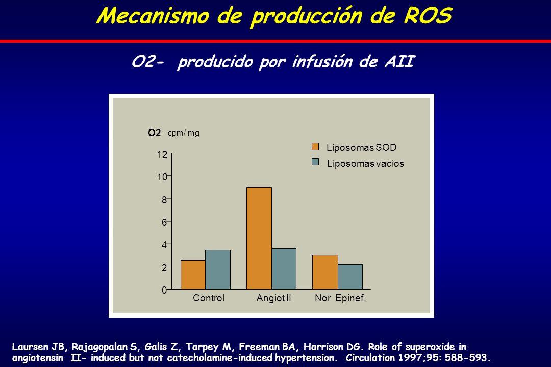 Mecanismo de producción de ROS O2- producido por infusión de AII