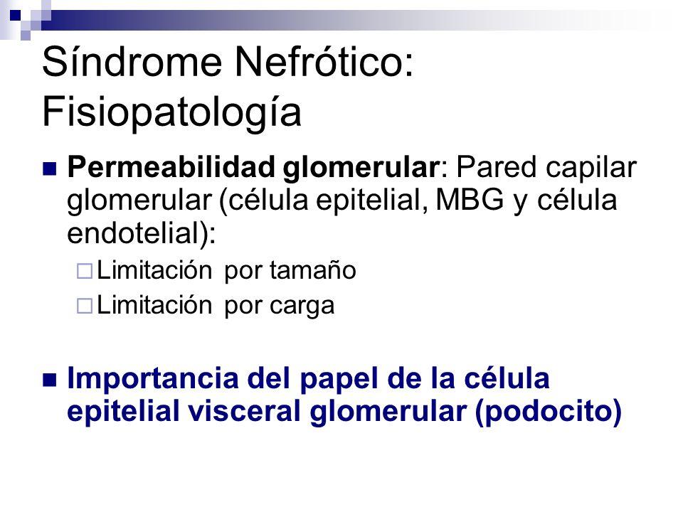 Síndrome Nefrótico: Fisiopatología