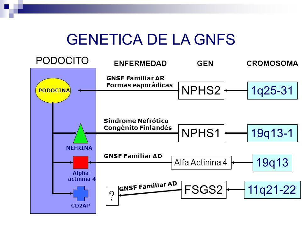 GENETICA DE LA GNFS NPHS2 1q25-31 NPHS1 19q13-1 19q13 FSGS2 11q21-22