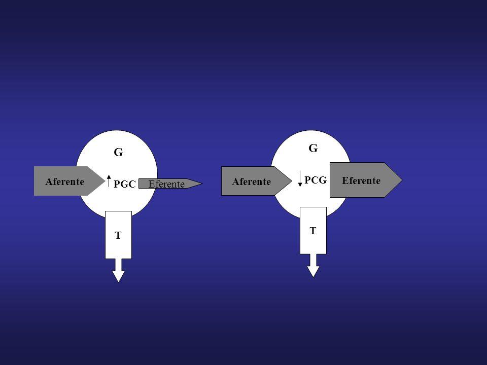 G G Eferente Aferente Aferente PCG PGC Eferente T T
