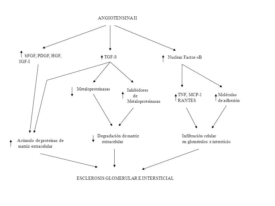 ANGIOTENSINA II bFGF, PDGF, HGF, IGF-I. TGF-ß. Nuclear Factor-B. Metaloproteinasas. Inhibidores.