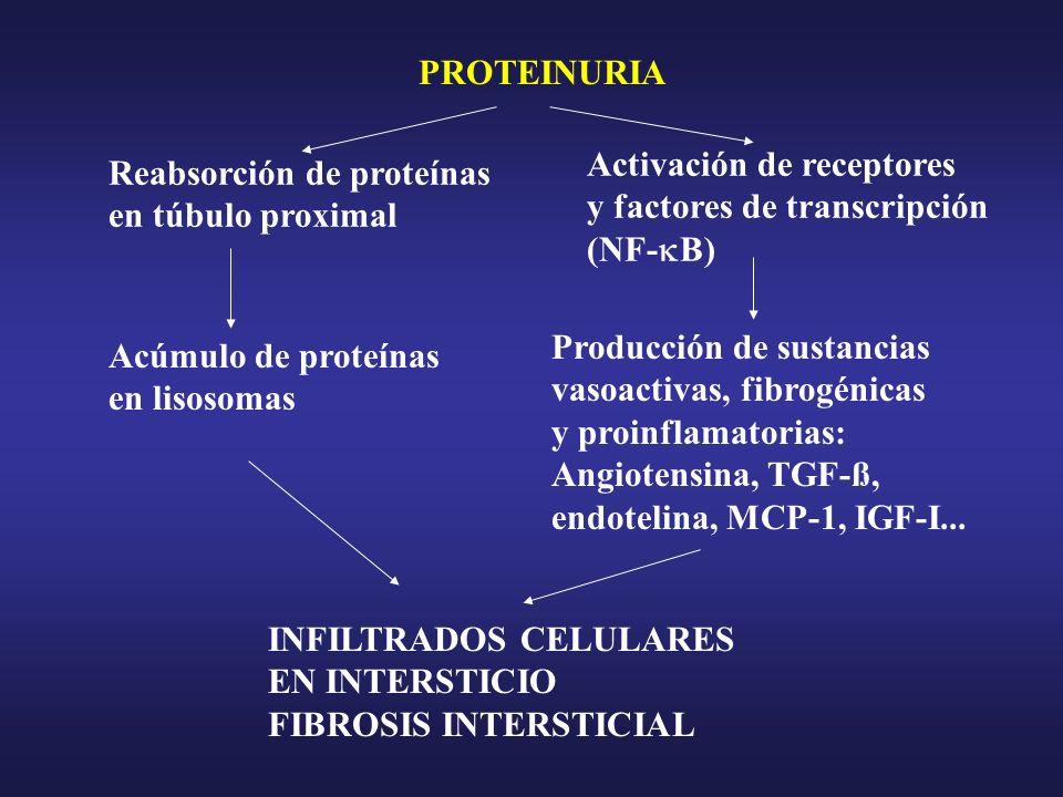 Activación de receptores y factores de transcripción (NF-B)