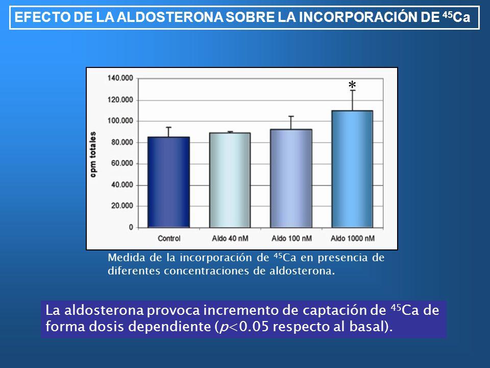* EFECTO DE LA ALDOSTERONA SOBRE LA INCORPORACIÓN DE 45Ca